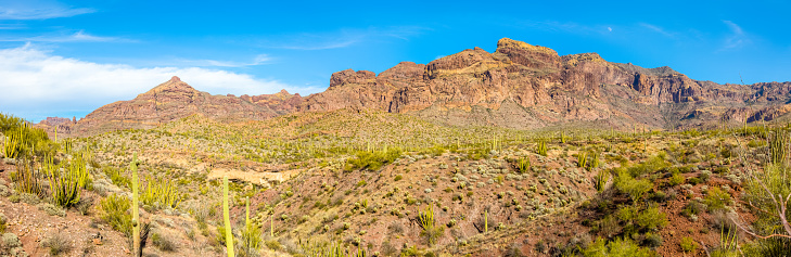 istock Organ Pipe Cactus National Monument in Arizona's Sonoran Desert - Vast Arid Desert with the Ajo Mountain Range on a Clear Day 873600596