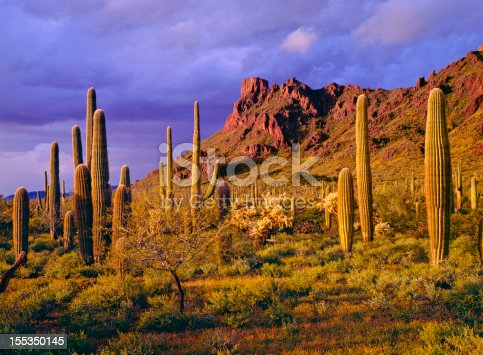 Clearing spring storm at the Ajo Mountains in Organ Pipe Cactus National Monument