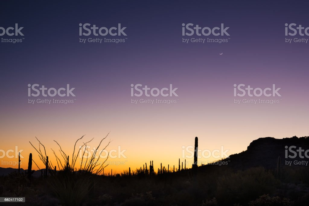 Organ Pipe Cactus National Monument Sunset royalty-free stock photo