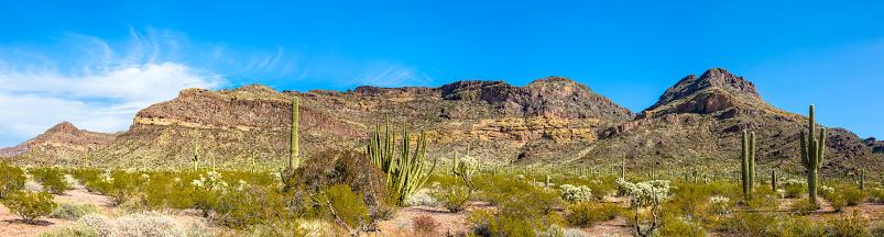 istock Organ Pipe Cactus National Monument, Thriving Cacti in Arid Sonoran Desert under Brilliant Blue Sky 873601782