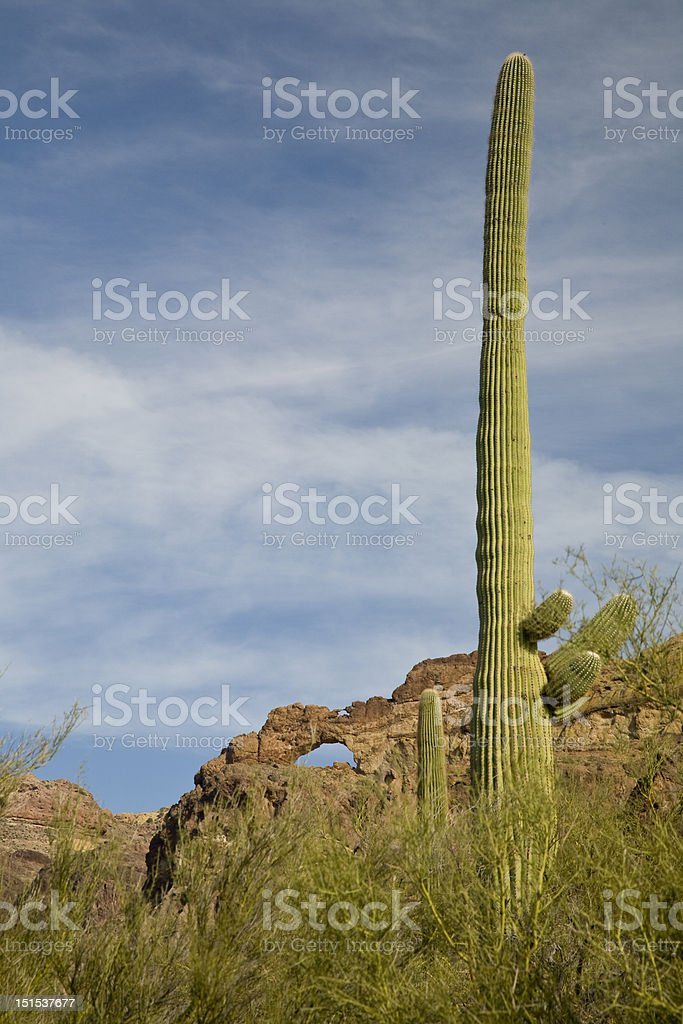 Organ Pipe National Monument royalty-free stock photo
