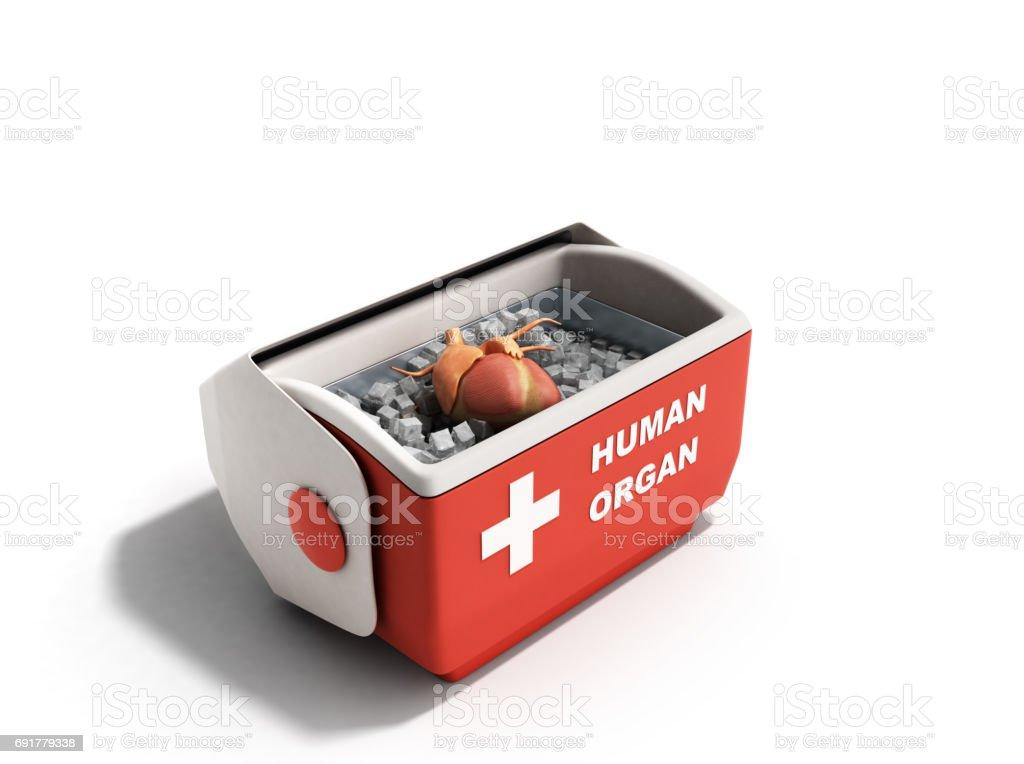 Kühlschrank In Rot : Orgelkonzept offene menschliche organ kühlschrank transportbox rot