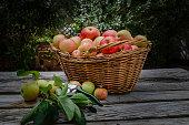 Organic Apples, pesticide-free, spray free. Harvesting from small garden.