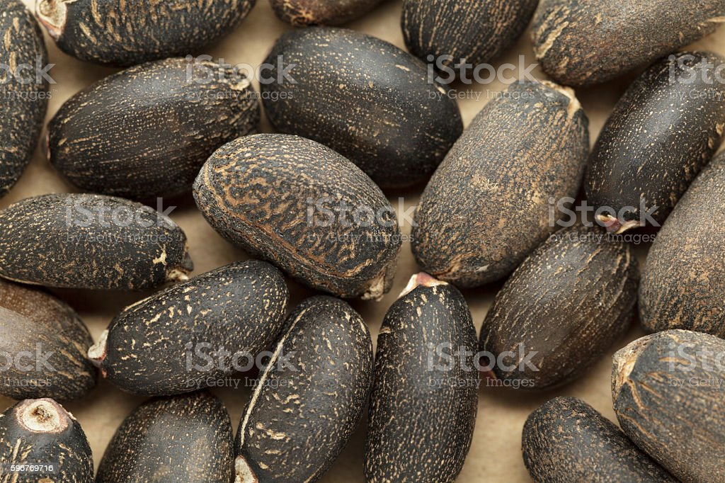 Organic Barbados nut (Jatropha curcas) seeds. stock photo