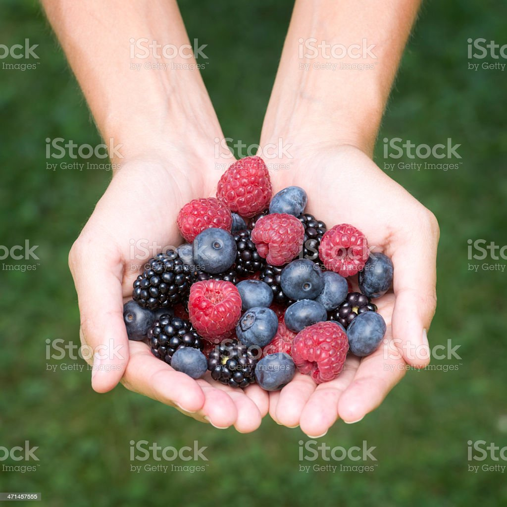 Organic Berries - Grown in the Wild (XXXL) royalty-free stock photo