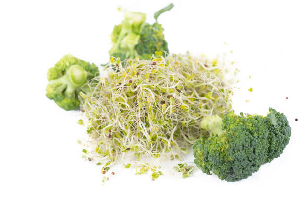 Ekologisk broccoli groddar och buketter bildbanksfoto