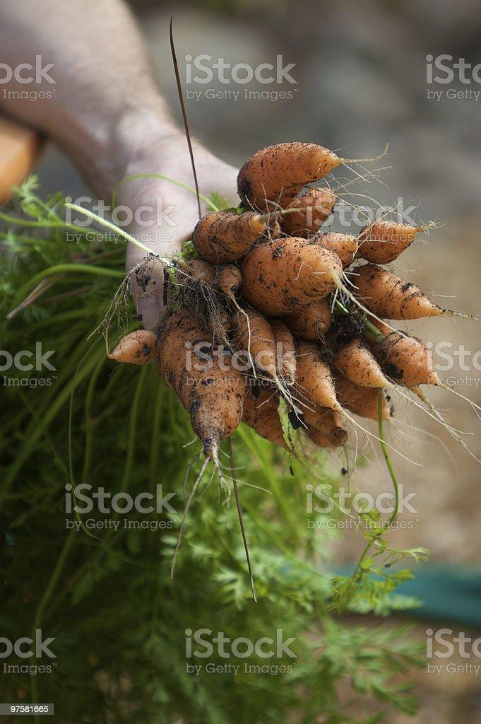 Bio carotte tas photo libre de droits