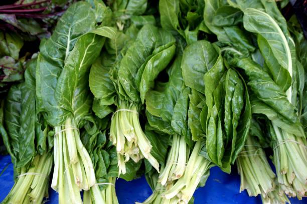 organik pazı - turpgiller brassicales stok fotoğraflar ve resimler