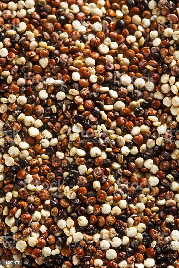 Organic Colorful Raw Quinoa stock photo