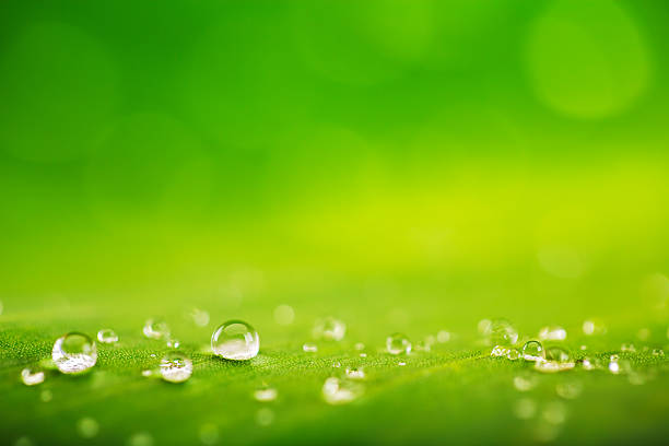 Organic conception, fresh green grass, leaf and water drops back stock photo
