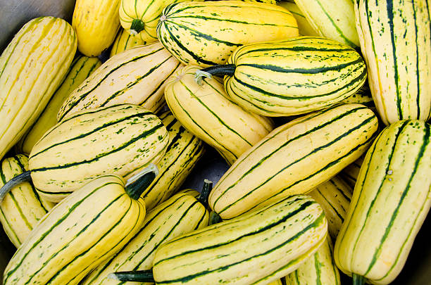 Organic Delicata squash stock photo