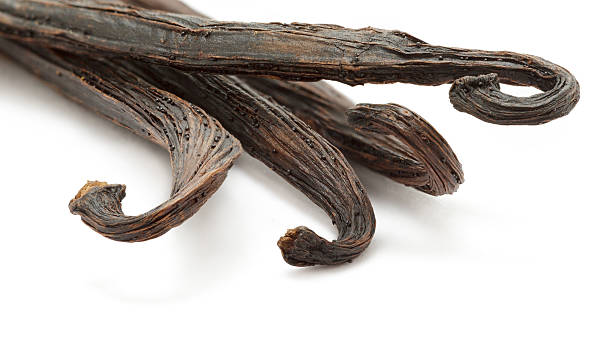 Organic dry sticks of Vanilla (Vanilla planifolia). Organic dry sticks of Vanilla (Vanilla planifolia) isolated on white background. Macro close up. Front view. vanilla orchid stock pictures, royalty-free photos & images