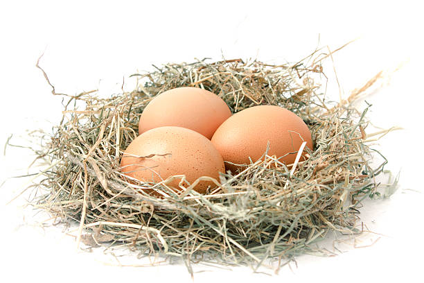 Organic eggs in a nest of hay on white background stock photo