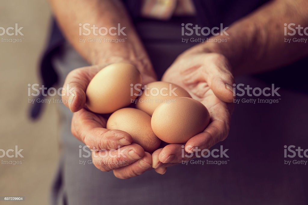 Organic Eggs stock photo
