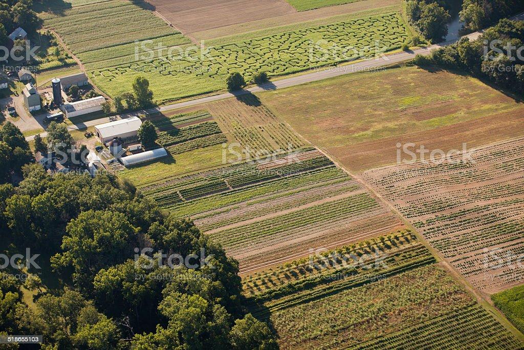 Organic Farm and Corn Maze stock photo
