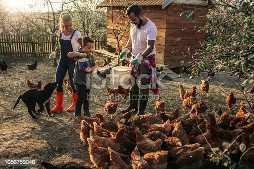 istock Organic Farm And Free Range Chicken Eggs 1056759046