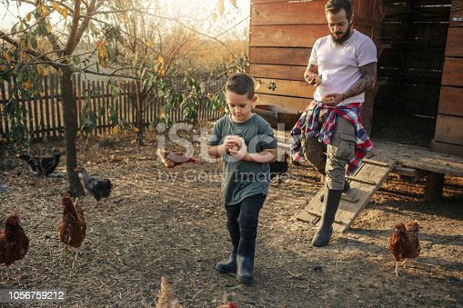 5 years old boy and his father collecting eggs together.