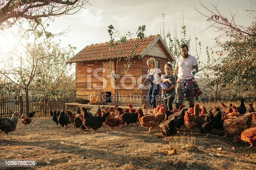 istock Organic Farm And Free Range Chicken Eggs 1056759226