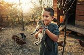 Organic Farm And Free Range Chicken Eggs
