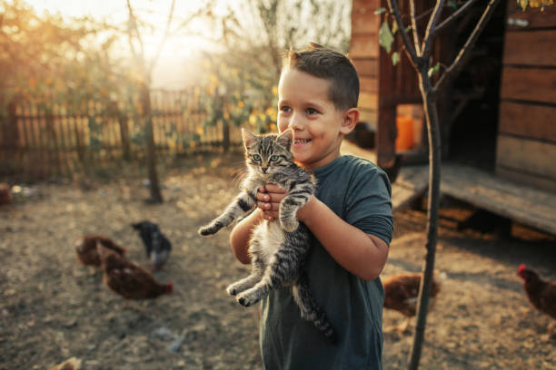 biologische boerderij en vrije uitloop kippeneieren - vogel herfst stockfoto's en -beelden