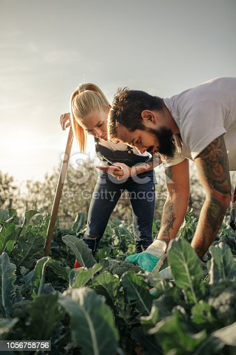 Tattooed couple working on their organic farm.