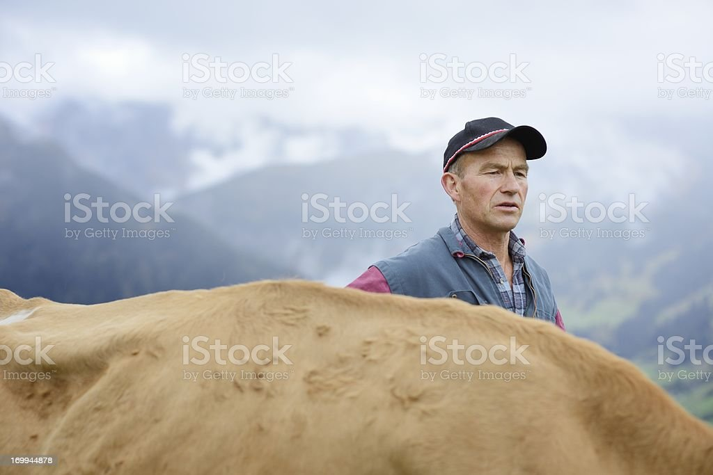 Organic Farmer with Cow stock photo