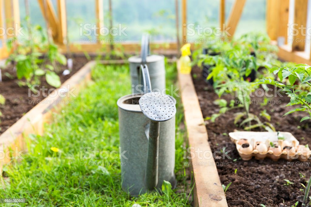 organic farming, gardening, agriculture concept. watering can in greenhouse stock photo