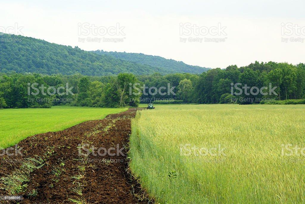 L'agriculture biologique-Vert lisier photo libre de droits