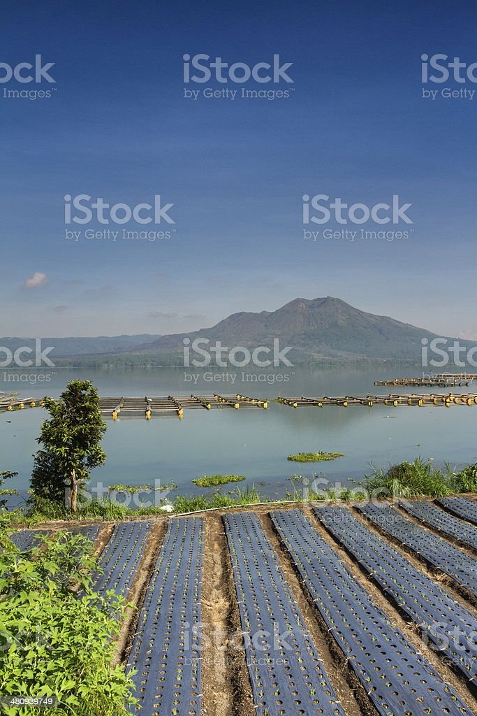 Organic farming in Bali royalty-free stock photo