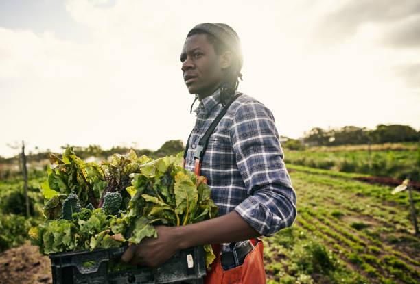 Biologische Landwirtschaft ist der natürliche Weg – Foto