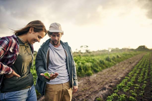 유기 농업, 그것은 품질 하지 수량 - 농업 뉴스 사진 이미지