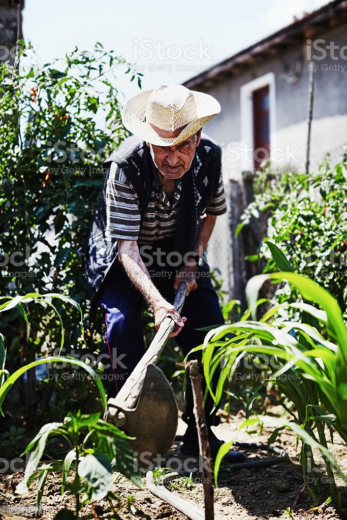 Organic farming royalty-free stock photo