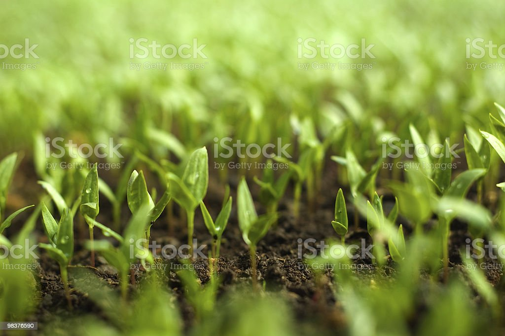 Organic farming royalty-free stock photo
