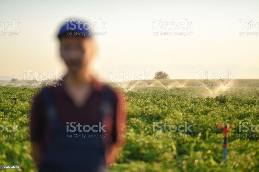 Organic Farming,Focus on Background stock photo