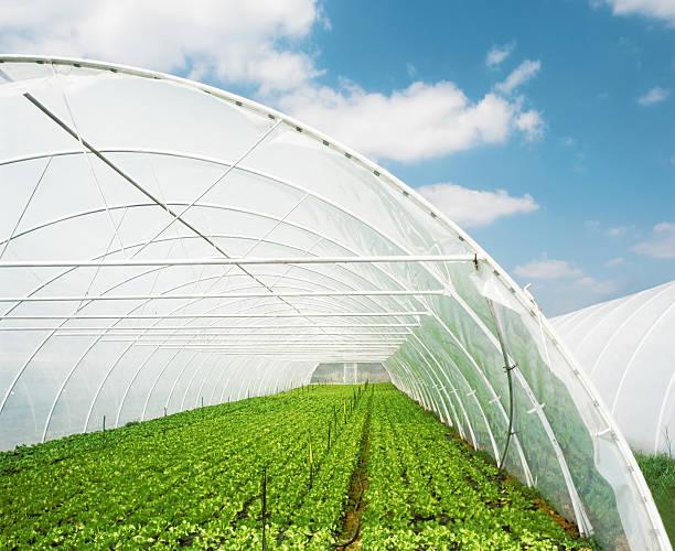 organic пища - оранжерея стоковые фото и изображения