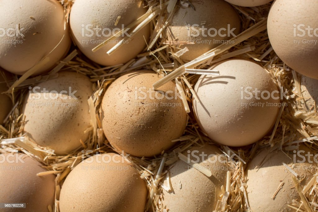 Organic fresh farm eggs at the market - Royalty-free Agriculture Stock Photo
