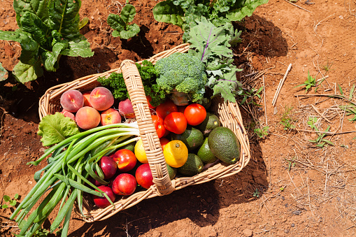 Organic Fruit And Vegetables Stock Photo - Download Image Now