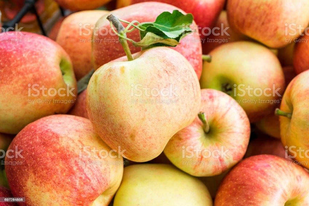 Organic gala apples stock photo