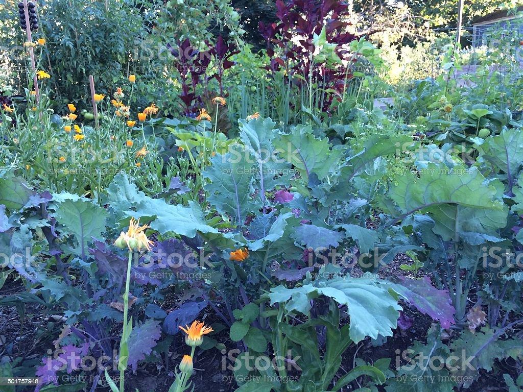Organic Garden Colorful stock photo