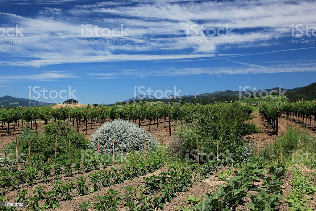 Organic Garden in Napa Valley royalty-free stock photo