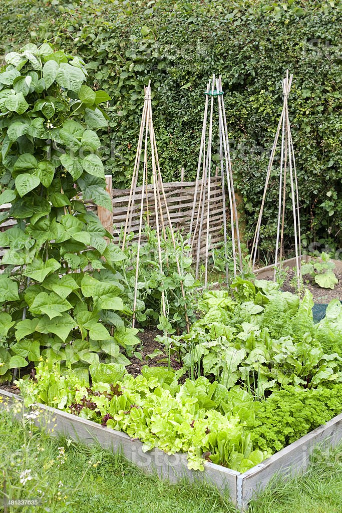 Organic Gardening on the Allotment royalty-free stock photo