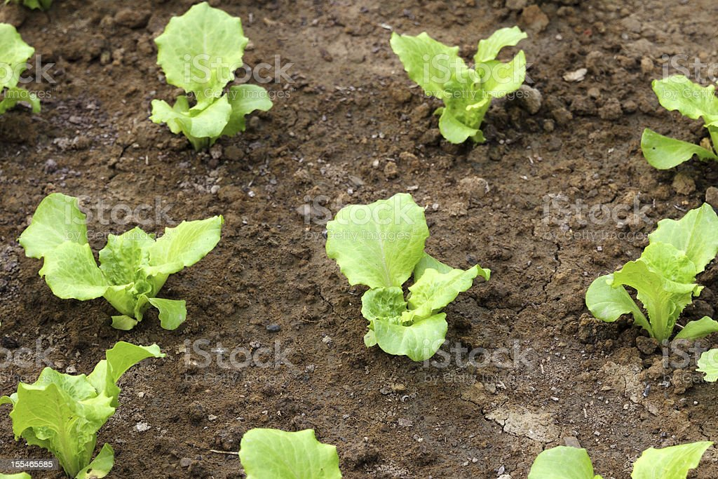 Organic gardening royalty-free stock photo
