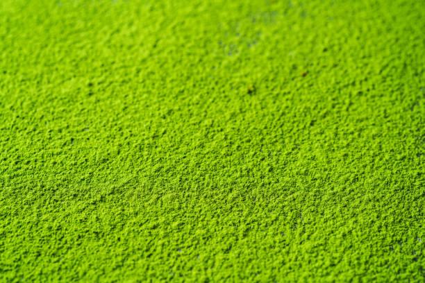 抹茶オーガニックグリーン - 抹茶 ストックフォトと画像