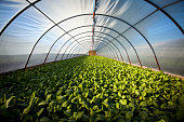 istock Organic greenhouse 1265704346