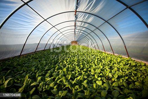 Harvest time on a farm