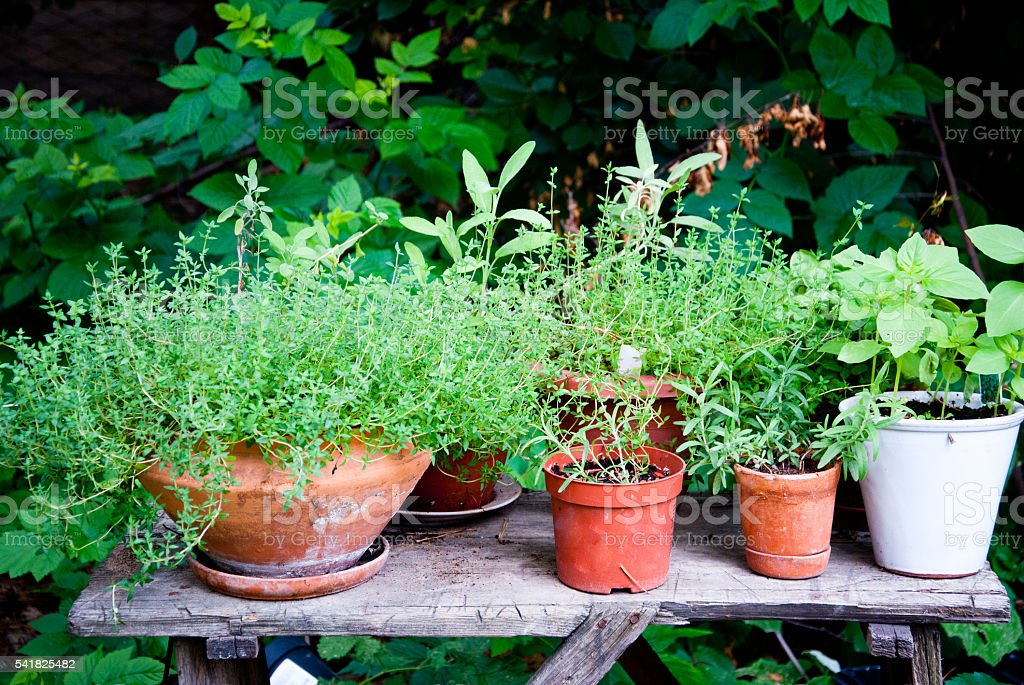 Organic Herb garden stock photo