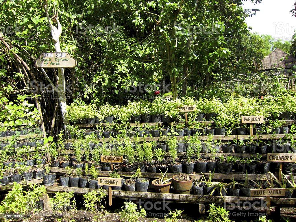 Organic Herbs Garden in Bee Farm royalty-free stock photo