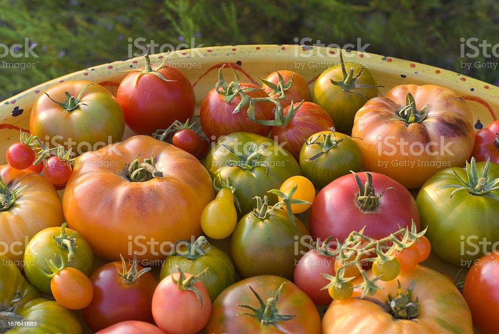 Organic Homegrown Fresh Summer Produce, Heirloom Tomatoes Vegetable Harvest stock photo