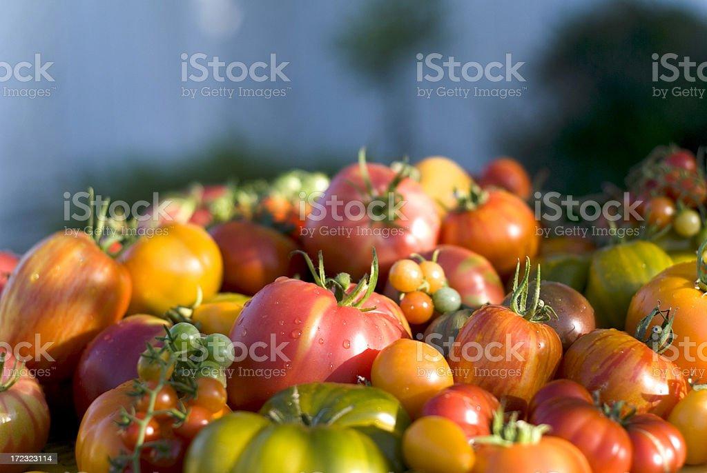 Organic Homegrown Produce Background; Heirloom Tomato & Garden Fresh Vegetables royalty-free stock photo