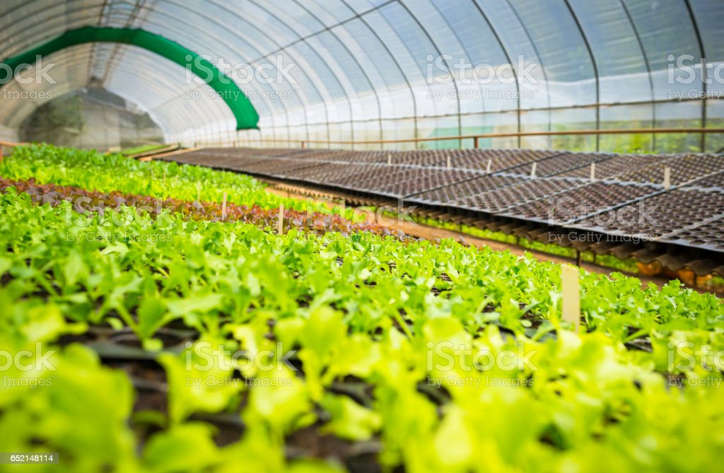 Organic hydroponic vegetable garden greenhouse farming stock photo
